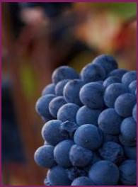 Burgundy 2014 Vintage Report